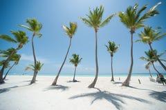 Palmas en una playa foto de archivo