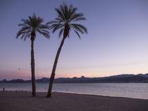 Palmas en una playa Foto de archivo libre de regalías
