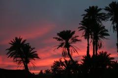 Palmas en una puesta del sol roja Fotos de archivo