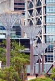 Palmas estilizados de Nikau. Rua Art. Wellington fotos de stock