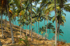 Palmas. Goa, la India Imagenes de archivo