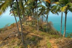 Palmas. Goa, la India Fotos de archivo libres de regalías