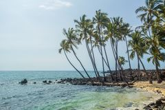 Palmas grandes da ilha Imagem de Stock