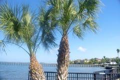 Palmas hermosas de Dunedin la Florida -02 fotografía de archivo libre de regalías