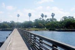 Palmas hermosas de Dunedin la Florida -05 imagen de archivo libre de regalías
