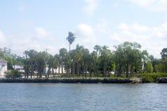 Palmas hermosas de Dunedin la Florida -03 imágenes de archivo libres de regalías