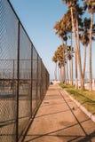 Palmas hermosas en Los Ángeles y el sueño californiano Foto de archivo libre de regalías
