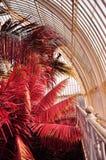 Palmas infravermelhas em jardins de Kew Foto de Stock