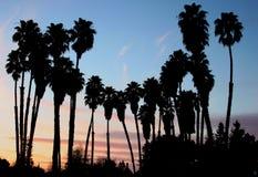 palmas las Стоковое Фото