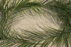 Palmas na areia Fotos de Stock