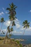 Palmas na costa Imagens de Stock Royalty Free