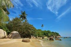 Palmas na ilha de Ko Samui da praia, Tailândia Foto de Stock Royalty Free