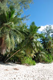 Palmas na praia Fotos de Stock Royalty Free