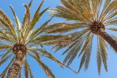 Palmas na praia Imagem de Stock Royalty Free