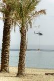 Palmas no beira-mar com elicopter do sapador-bombeiro no fundo, I Fotografia de Stock Royalty Free
