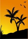 Palmas no por do sol Imagem de Stock