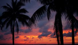 Palmas no por do sol Fotografia de Stock Royalty Free