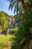 Palmas no vale de Preveli, Creta foto de stock