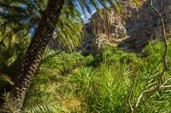 Palmas no vale de Preveli, Creta foto de stock royalty free