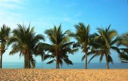 Palmas and ocean. Stock Photography
