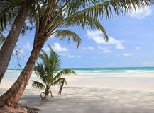 Palmas pequeñas y grandes en la playa Foto de archivo libre de regalías