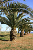PALMAS, 'promenade' y mar Imagen de archivo