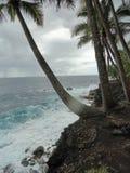 Palmas que alcançam para fora para abraçar o oceano de turquesa na ilha grande de Havaí Imagem de Stock
