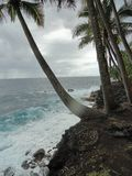 Palmas que alcanzan hacia fuera para abrazar el océano de la turquesa en la isla grande de Hawaii Imagen de archivo
