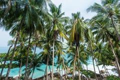 Palmas, rocas y mar de coco en Phuket Imagenes de archivo