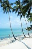 Palmas tropicais. Imagens de Stock