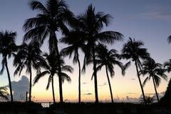 Palmas tropicais contra um por do sol amarelo e roxo Foto de Stock