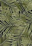 Palmas tropicales Fotografía de archivo libre de regalías