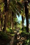 Palmas tropicales en el parque Imágenes de archivo libres de regalías