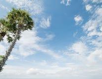 Palmas tropicales y cielo nublado fotos de archivo libres de regalías