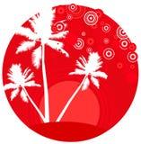 Palmas tropicas da praia Fotografia de Stock