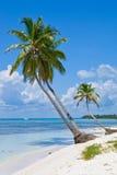 Palmas verdes en una playa blanca de la arena Foto de archivo libre de regalías