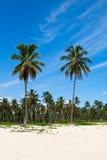 Palmas verdes en una playa blanca de la arena Foto de archivo