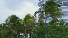 Palmas vivas 4k florida EUA do prédio de apartamentos de Miami Beach video estoque