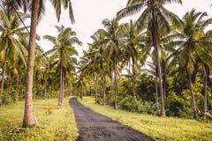 Palmas y camino de coco en la isla tropical Fotos de archivo libres de regalías