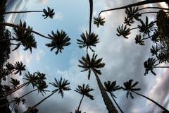 Palmas y cielo de coco Imágenes de archivo libres de regalías