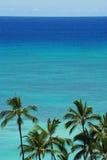 Palmas y océano Foto de archivo libre de regalías