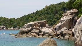 Palmas y piedras tropicales en la pequeña playa Muchas palmas exóticas verdes que crecen en orilla rocosa cerca del mar azul tran metrajes