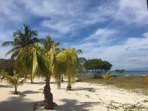 Palmas y playa blanca fotos de archivo libres de regalías