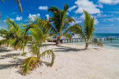 Palmas y playa en la isla del calafate de Caye, Beli fotografía de archivo