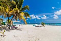 Palmas y playa en la isla del calafate de Caye, Beli imagenes de archivo