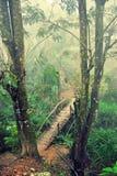 Palmas y puente en niebla de la mañana Imágenes de archivo libres de regalías