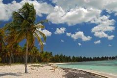 Palmas y sol, isla de Saona, República Dominicana imagenes de archivo