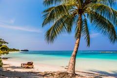 Palmas y sunbeds de la playa Fotografía de archivo
