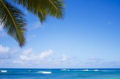 Palmblätter über Ozean Stockfoto