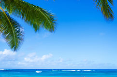 Palmblätter über Ozean in Hawaii Lizenzfreie Stockbilder